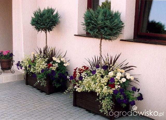 Problemy Juz Na Wstepie Czyli Brak Konkretnego Pomyslu Strona 8 Forum Ogrodnicze Ogrodowisko Plants Container Gardening Garden