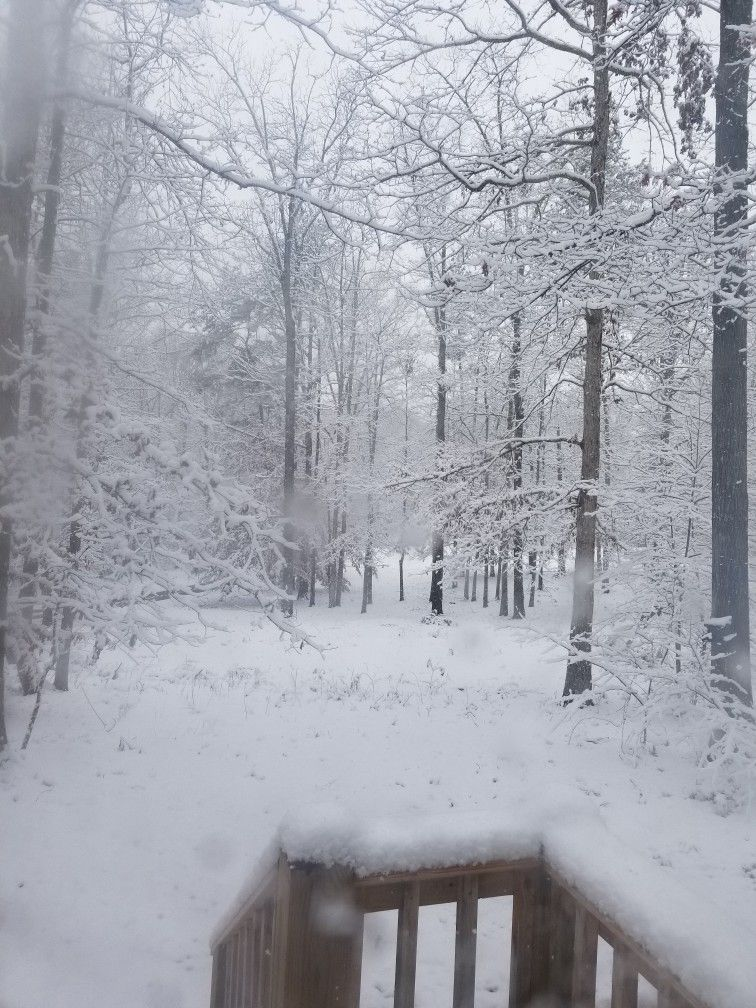 The flurries we were to expect turned our backyard into a beautiful winter wonderland Dec. 2017 picture shared by user.