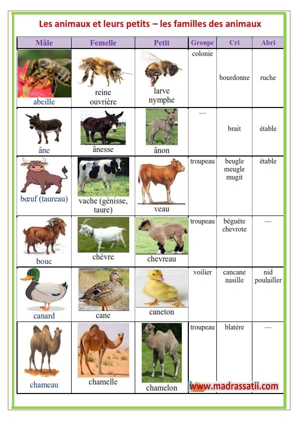 Les animaux de la ferme et leurs cris - YouTube