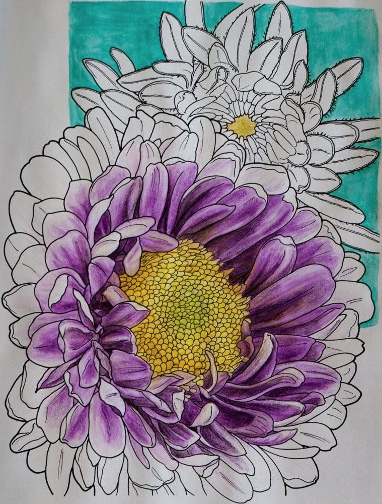 Creative Haven In Full Bloom Coloring Book Books Ruth Soffer Really Fun With Watercolor Pencils By Mary Ingold On Aug 16 2015