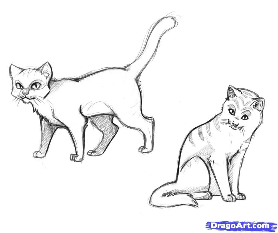 How To Draw Warrior Cats By Dawn With Images Cat Drawing For
