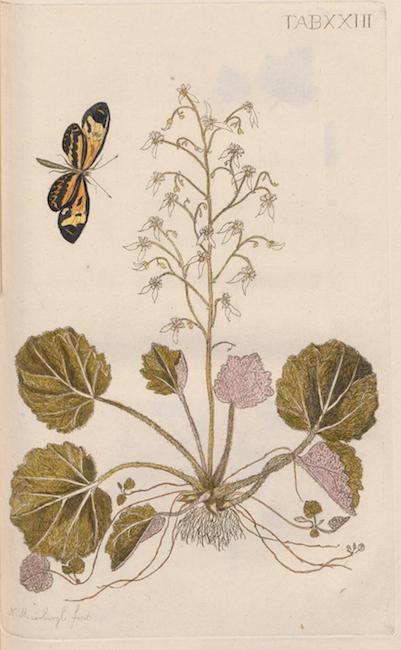 Plantæ rariores vivis coloribus depictæ.1789