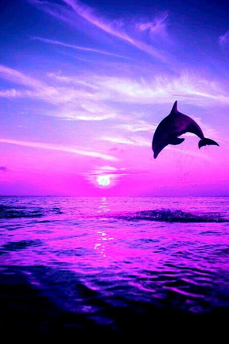 Beautiful Pink Sunset With Beautiful Dolphin Dolphin Images Dolphin Art Dolphins