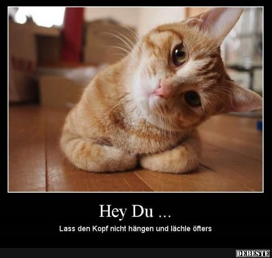 Hey you .. Do not hang your head and smile more often .. | Funny pictures, sayings, jokes, really funny - Today Pin