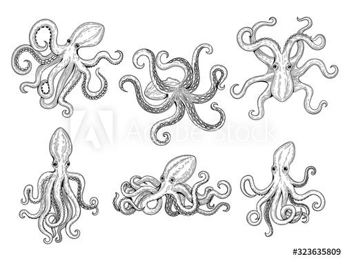 Octopus. Ocean fishes big underwater monster wild squid vector hand drawn marine tattoo template. Illustration octopus ocean, animal monster tattoo - Buy this stock vector and explore similar vectors at Adobe Stock