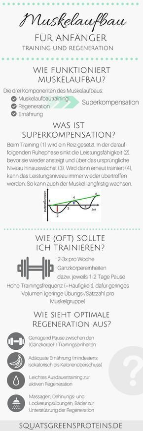 und Regeneration für Anfänger - Muskelaufbau für Anfänger (1 Training und Regeneration für Anfänger - Muskelaufbau für Anfänger Infografik - Muskelaufbautraining - Fitness Krafttraining Sport - Squats, Grens & ProteinsTraining und Regeneration für Anfänger - Muskelaufbau für Anfänger Infografik - Muskelaufbautraining ...