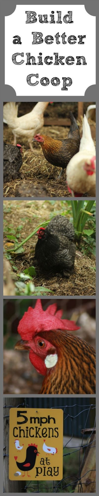 6 Mistakes I Made in the Chicken Coop (And How You Can ...
