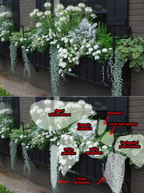 Outdoor Hanging Flower Baskets