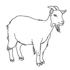Top 25 Free Printable Goat Coloring Pages Online Goat Picture Cute Goats Farm Animal Coloring Pages