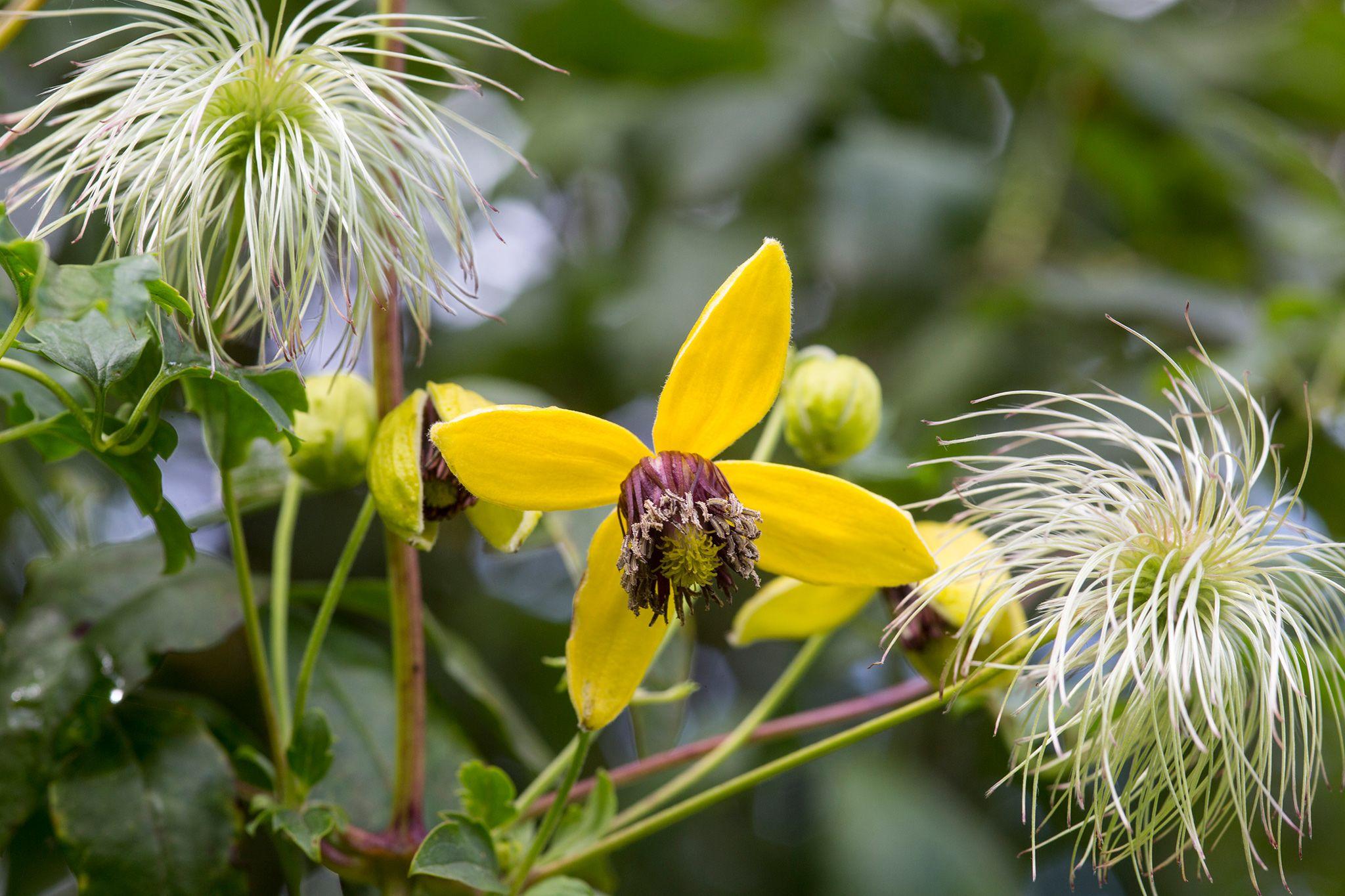 e8e78084e2eb3fff7b372a169768fa30 - How To Take Hydrangea Cuttings Gardeners World