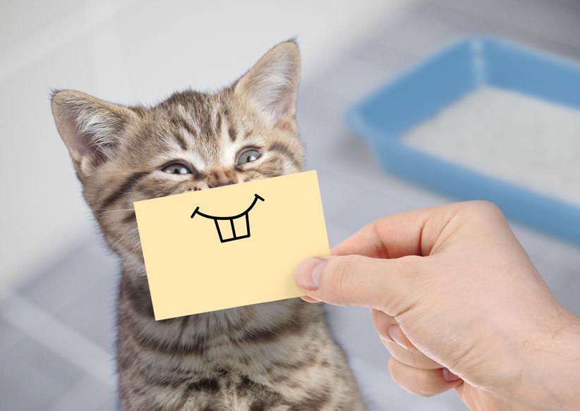 Help My Kitten Is Losing Teeth Two Crazy Cat Ladies Losing Teeth Pictures Of Baby Cats Feeding Kittens