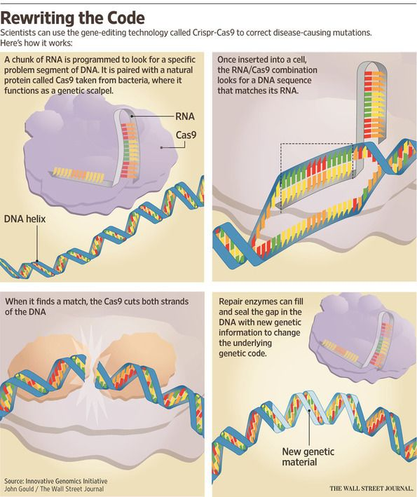 Why Crispr-Cas9 Gene-Editing Technology Has Scientists Excited Ap - new molecular blueprint definition