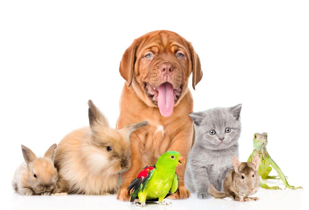 Pet Care Burlington County NJ National pet day, Pet day