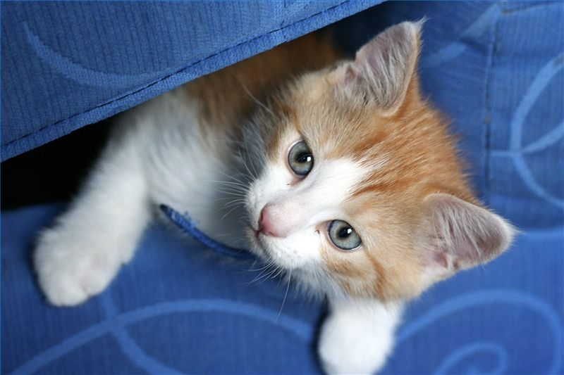 The Best Way to Remove Cat Urine From Furniture Fabric