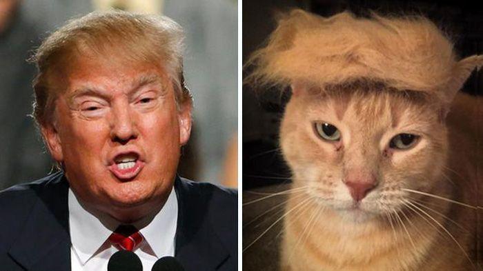 """Résultat de recherche d'images pour """"chat sosie de trump"""""""