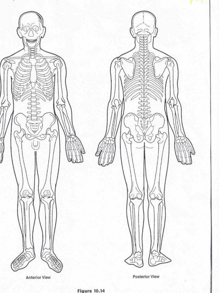 blank human body diagram blank human body diagram muscles female body diagram new blank muscle [ 770 x 1024 Pixel ]
