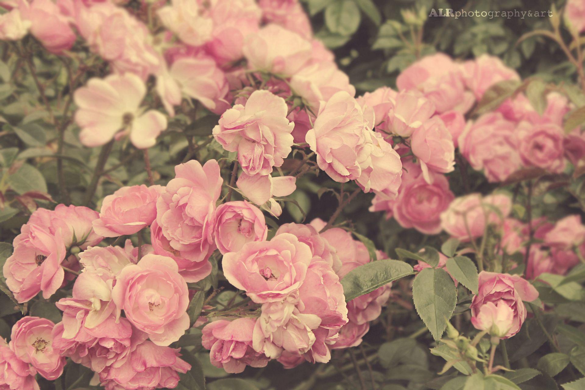Розовые картинки для твиттера
