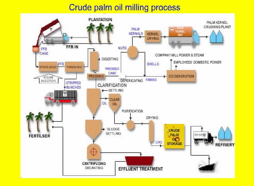 The Palm Oil Process All About Oil Palm Pinterest Palm Palm