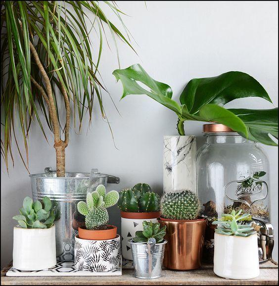 Chambre Exotique Plantes