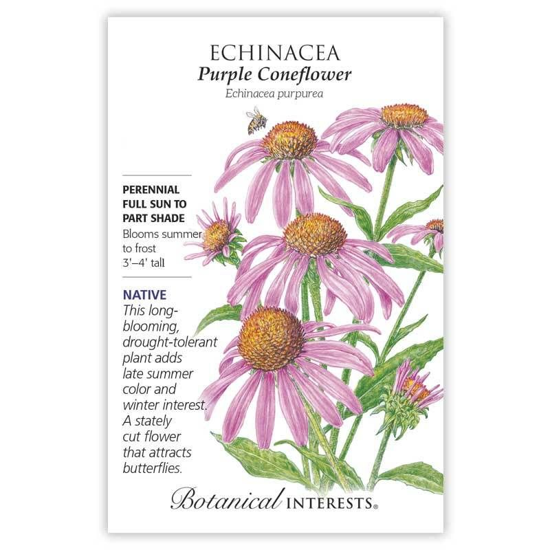 Purple Coneflower Echinacea Seeds Echinacea Part Shade Flowers Shade Flowers