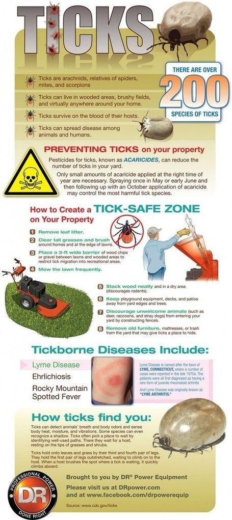 Protecting Your Family From Ticks Infographic Flea