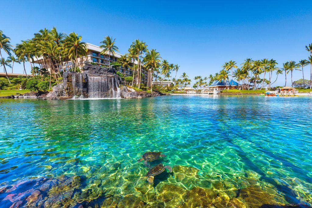 Dive with dolphins hawaii hotels hawaii resorts kauai