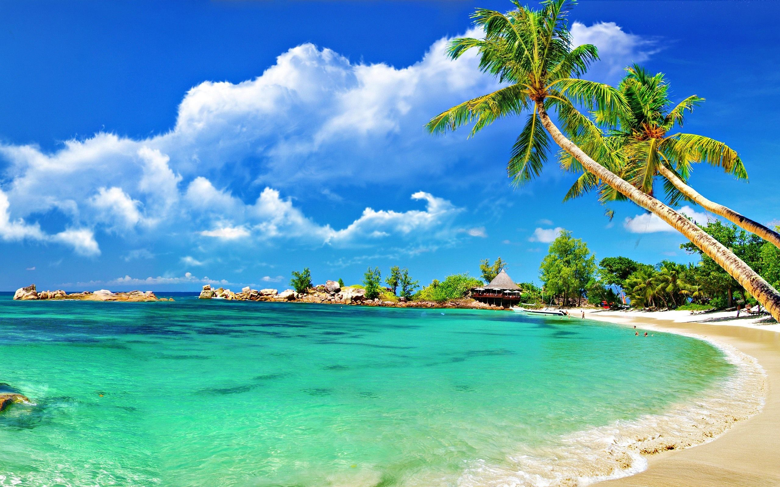 Poster Palmen Insel Mauritius Beach Morning Medium NEU