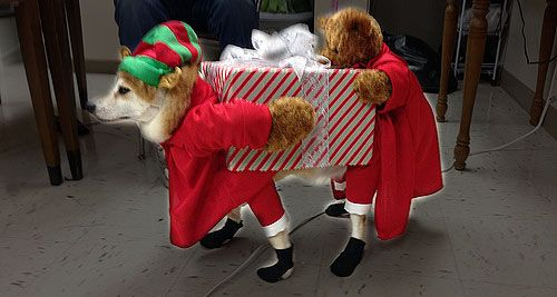 CUTE DOG CHRISTMAS OUTFITS - Newborn Clothing Blog Articles - CUTE DOG CHRISTMAS OUTFITS - Newborn Clothing Blog Articles