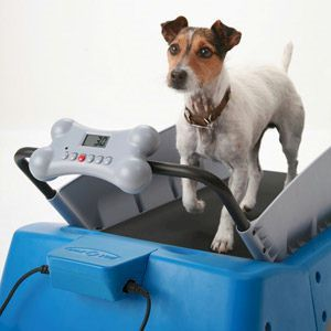 Dog Treadmill Small Wireless Pet Fences Undeground Dog Fences