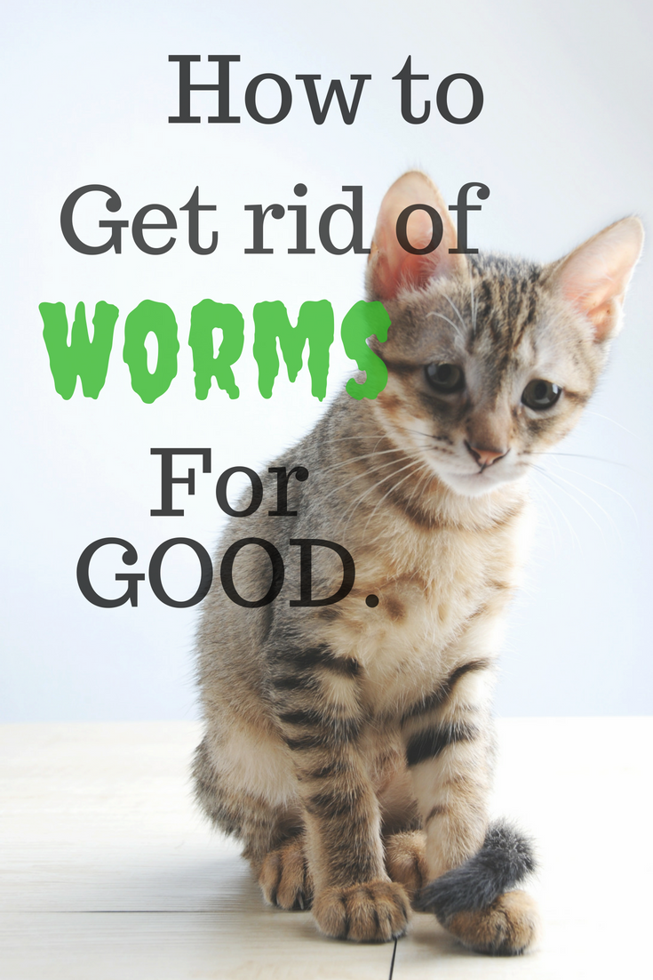 Is Your Poor Fur Baby Suffering From Worms Visit The Blog To Find Out How To Identify The Type Of Worms You Have How To Cat Dewormer Worms In Dogs