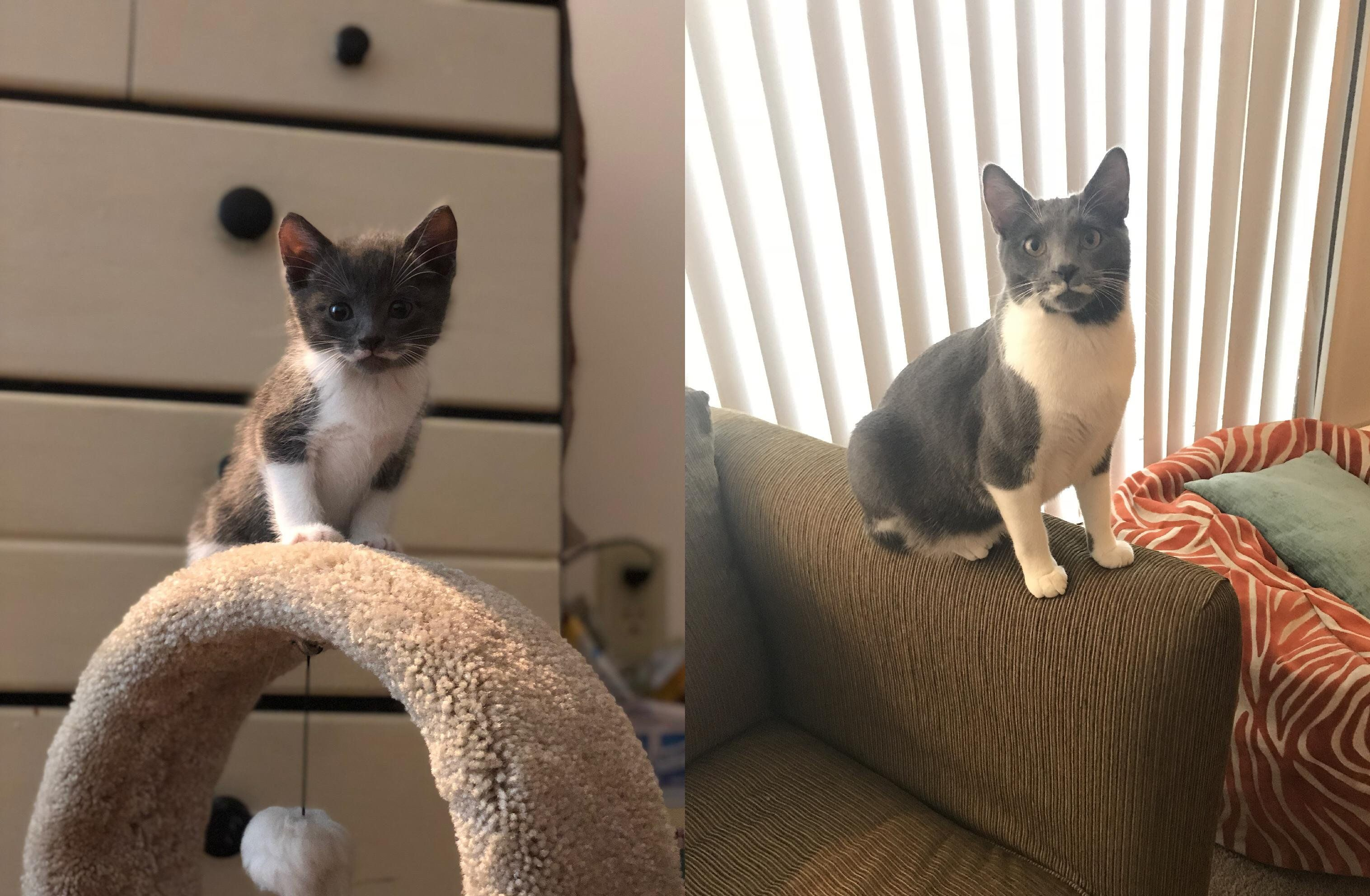 It S Winston S First Birthday Today Here He Is At 6 Weeks Old Vs 1 Year Old Http Bit Ly 2wttjv Cute Cats And Kittens Kitten Pictures Funny Cats And Dogs