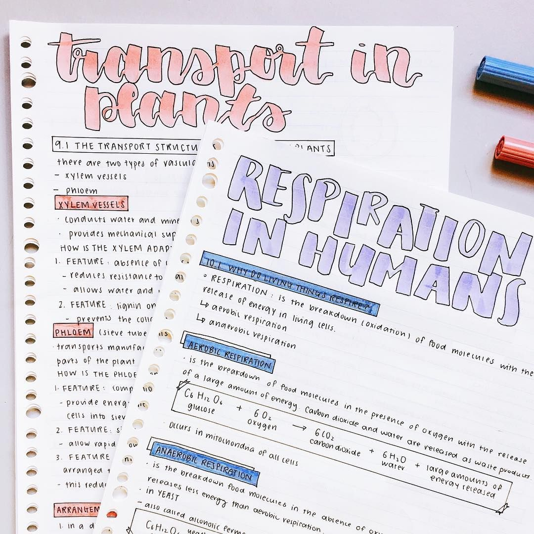 Biology notes, super cute layout // follow us @motivation2study for