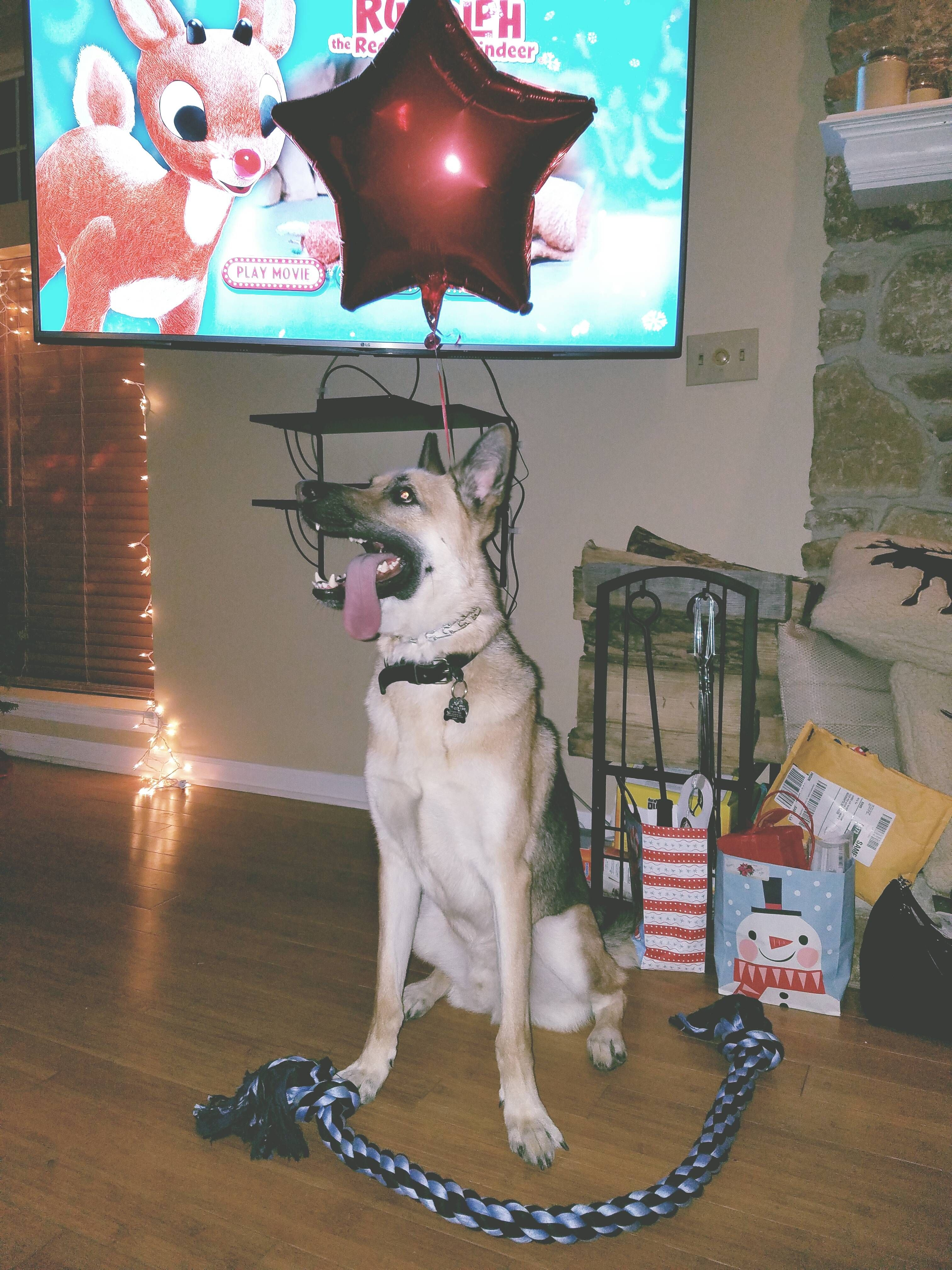 Kyro named after George Michael on his first Christmas.