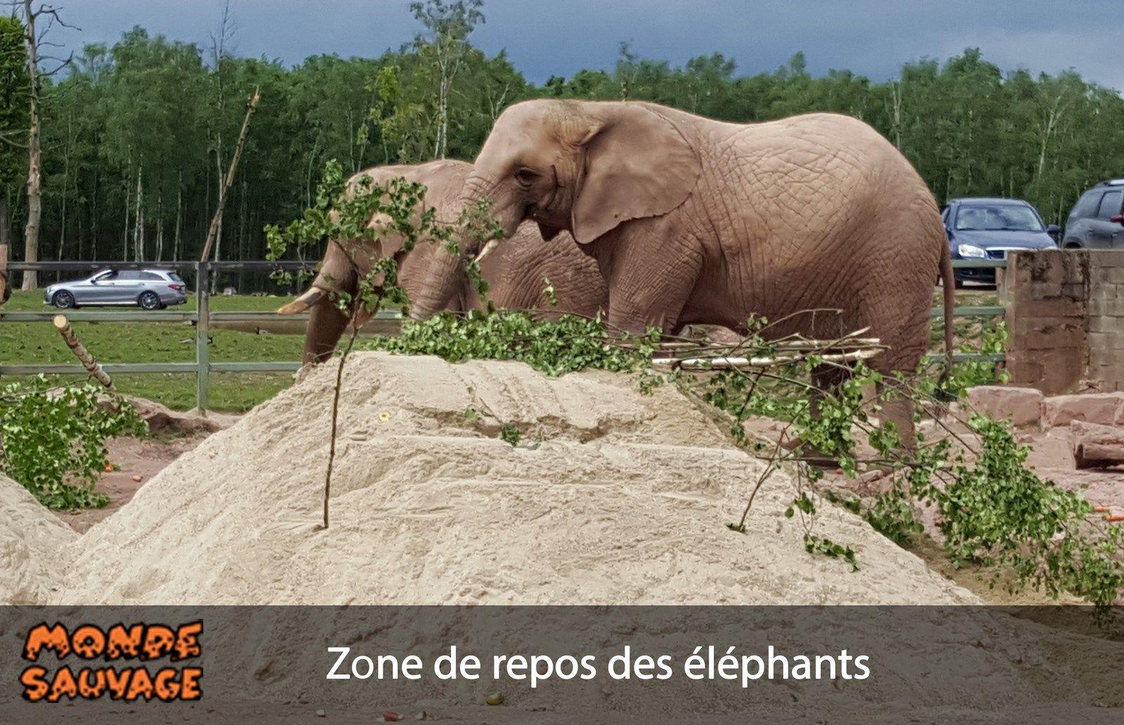 Enrichissements de l'enclos des éléphants.