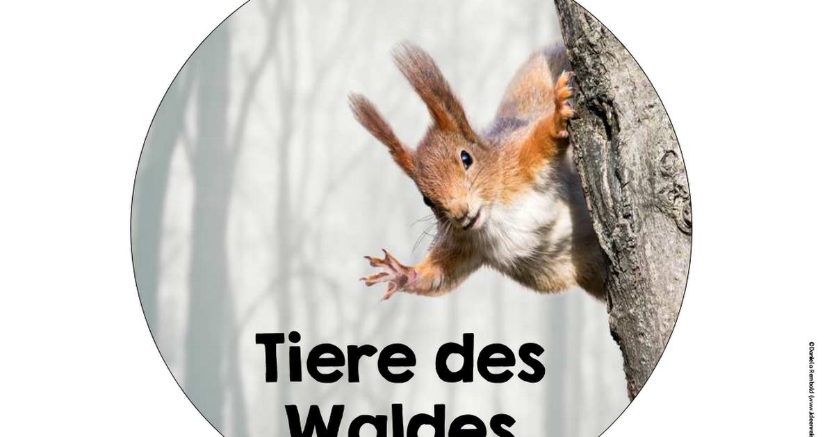 legekreiswaldtierepdf  tiere des waldes waldtiere tiere