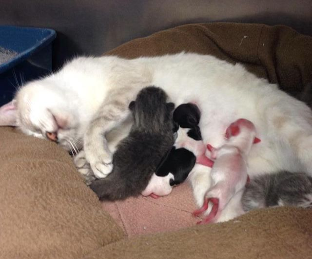 After Two Premature Puppies Were Rejected By Their Mother They