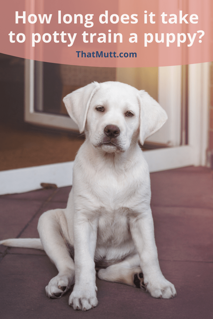 How Long Does It Take To Potty Train A Puppy In 2021 Puppy Training Potty Training Dog Training Tips
