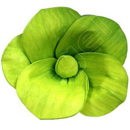 Lime splice kayla i paper flowers australia i available at http lime splice kayla i paper flowers australia i available at http mightylinksfo