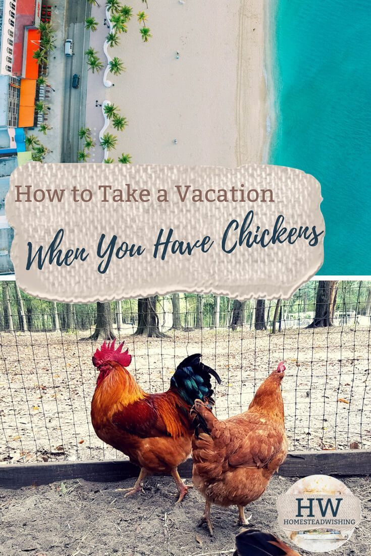 How Do You Take a Vacation When You Have Chickens | Urban ...