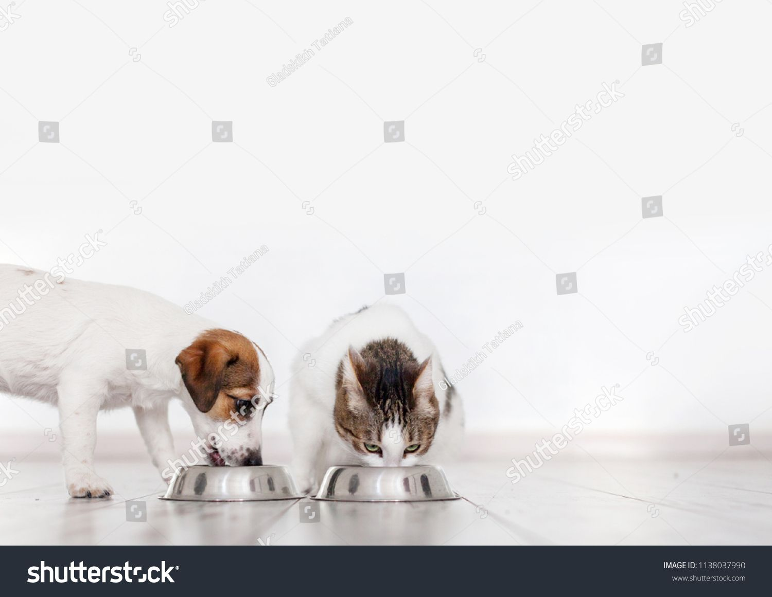 Dog And Cat Eating Food Puppy Eating Dogs Food Pets At Homeeating Food Dog Cat Dog Cat Puppies Dogs