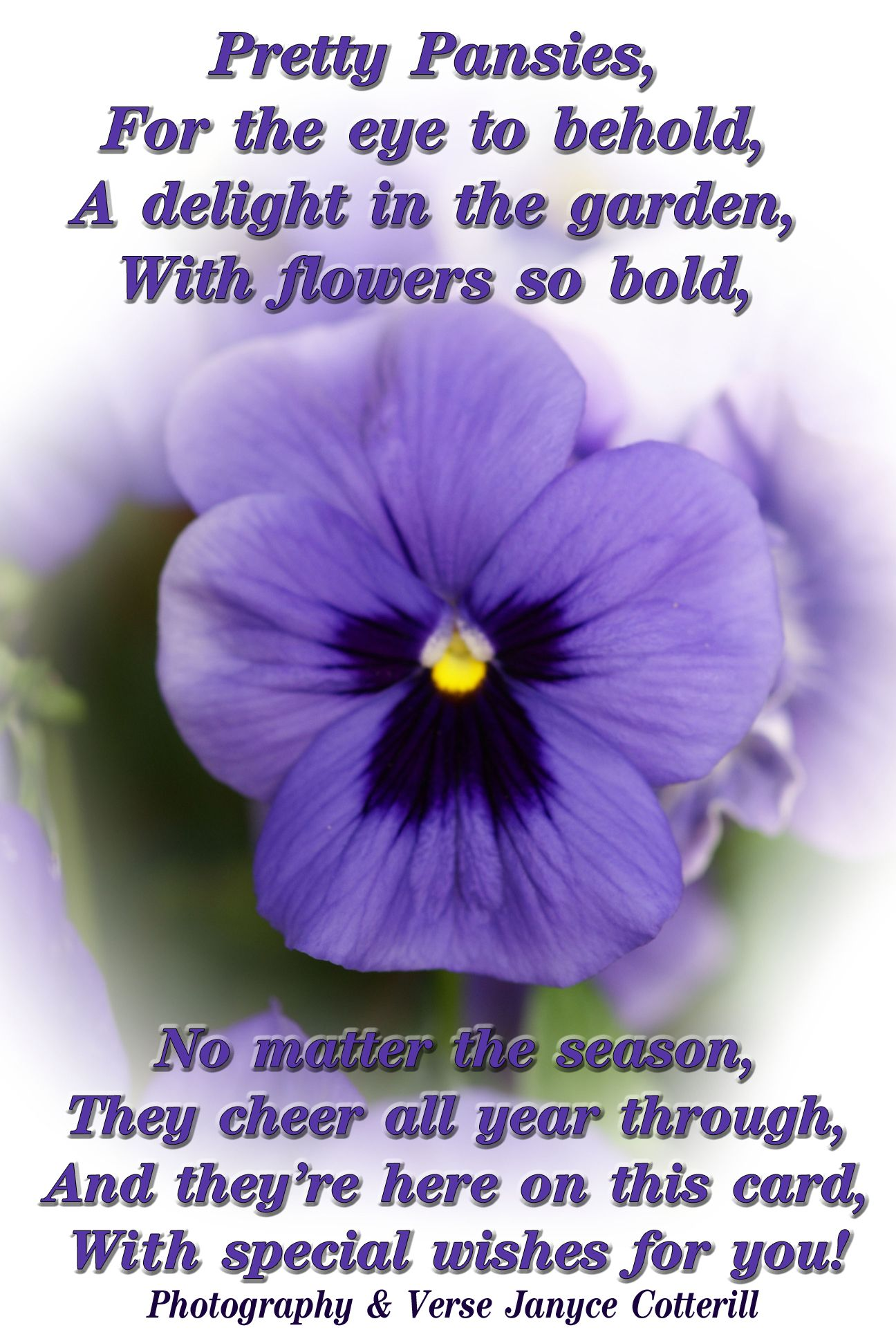One Of My Own Pansy Verses Feel Free To Use This Or Any Of My Other Verses In You Card Making Or Crafting Verses For Cards Pansies Pansies Flowers