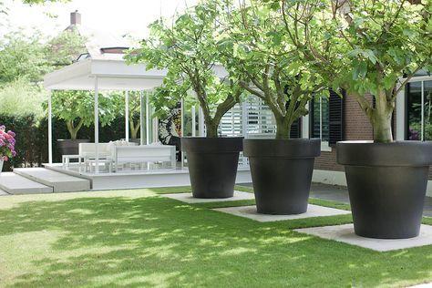 Bomen In Grote Potten Op Een Tegel Tuin Urban Tuinieren Tuin