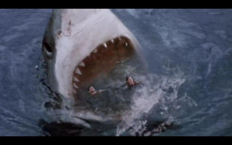 megalodon shark attack - HD1440×900