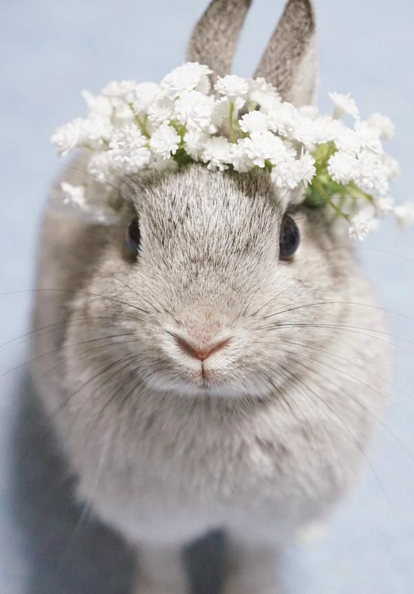 sweet rabbit wearing a crown of white flowers