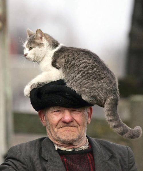Ho un Gatto sulla testa 😂