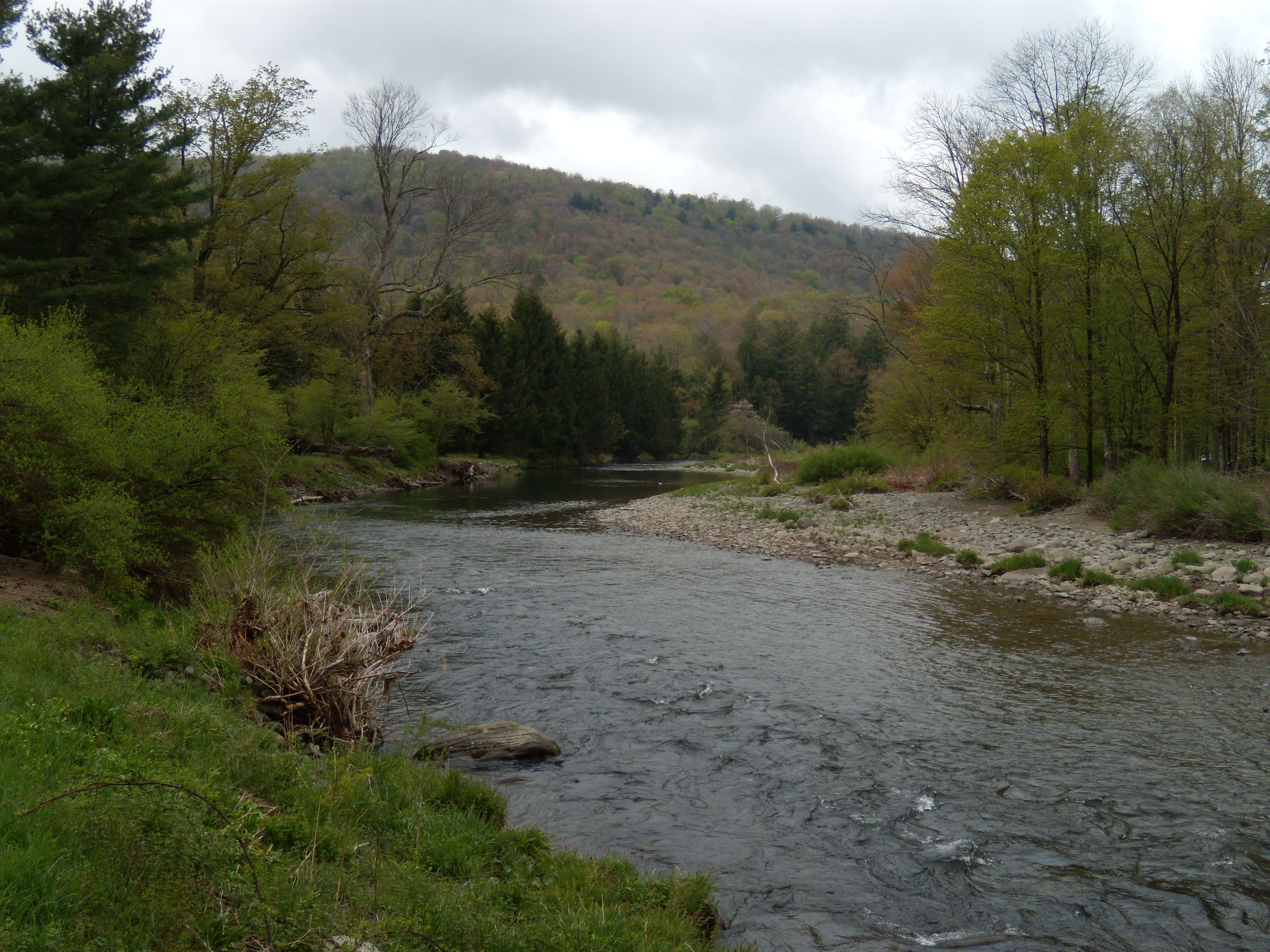 Beaverkill river at beaverkill campground nysdec for Roscoe ny fishing