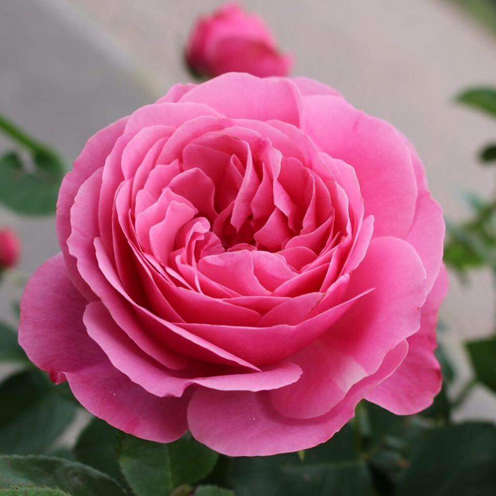 Good evening I love my garden