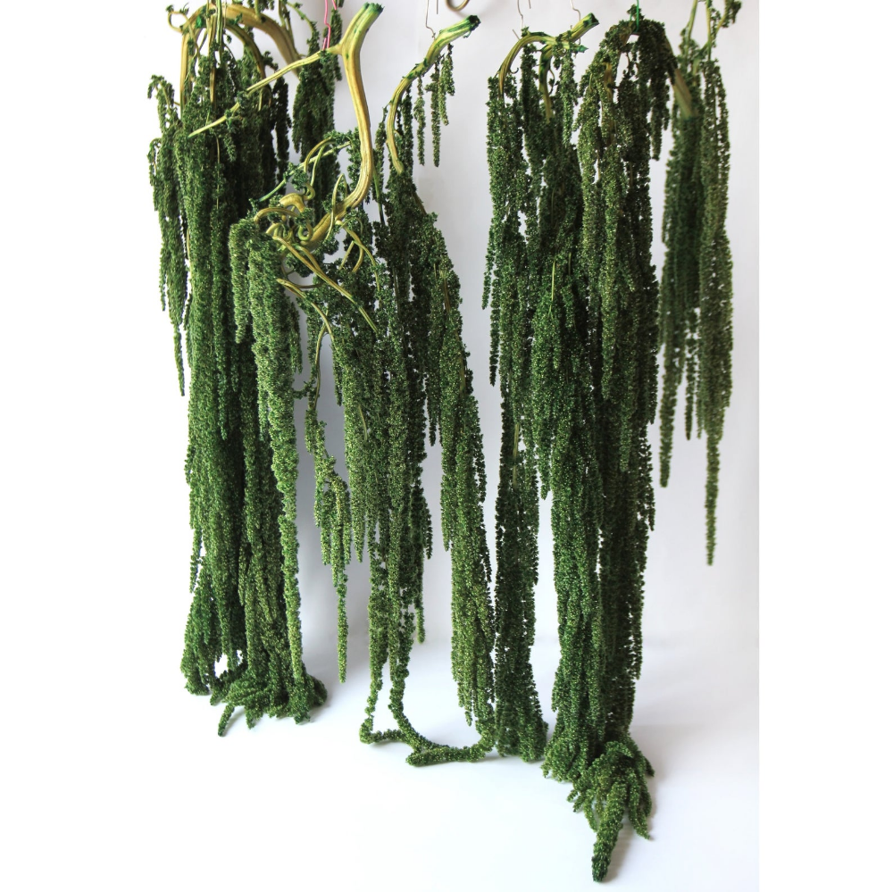 Hanging Amaranthus Green Preserved Plants Wedding Flowers Arch Decor Living Walls Indoor Jungle Price For 1pcs No Water Needed Amaranthus Plants Moss Wedding Decor