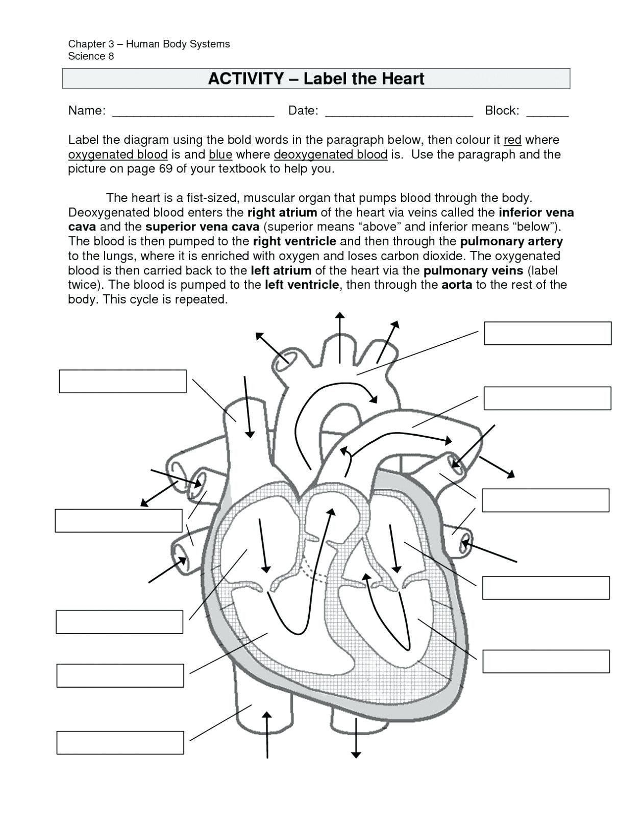 Digestive System Worksheet Answer Key Pin On Coloring Pages Ideas Printable Circulatory System Circulatory Sys In 2020 Heart Diagram Human Heart Diagram Heart For Kids