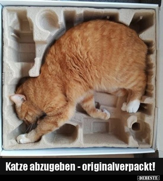 Hand over cat - in original packaging! .. | Funny pictures, sayings, jokes, really lu ... -  Hand over cat – in original packaging! .. | Funny pictures, sayings, jokes, really funny  - #cat #funny #Gatosanime #gatoscats #gatosmemes #gatosvideos #Hand #jokes #original #packaging #Pictures #sayings